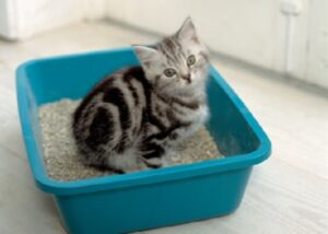 obat kucing mencret dan diare