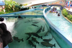 jungle waterpark bogor
